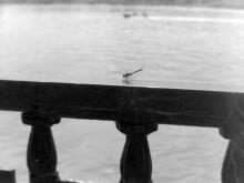 Стрекоза. Набережная Дона. Последние дни июля 1979 года.