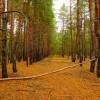 Осень в Каменских лесах
