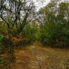 Памятник природы Черная балка