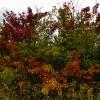 Осень на реке Калитве