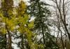 Деревья в парке Островского