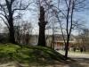 Дерево на Темерницком городище